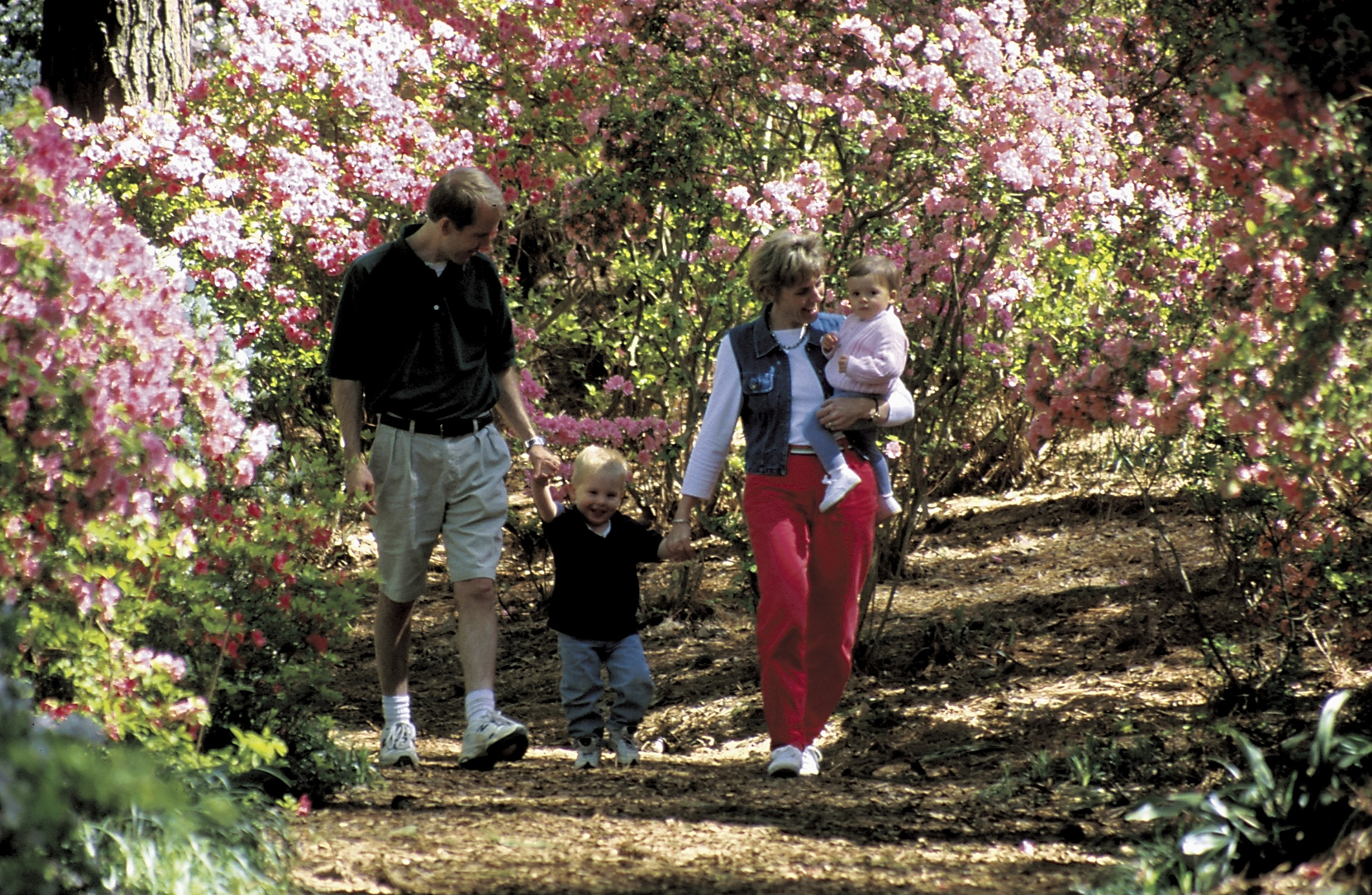 Best Things To Do At Callaway Gardens Garden Ftempo