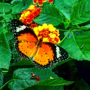 The Butterfly House at Perry's Cave Family Fun Center is amazing!