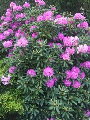 Full Bloom - High Hampton Inn & Country Club, Cashiers, NC